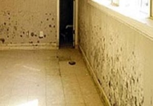 Mold_Remediation aas restoration kansas city